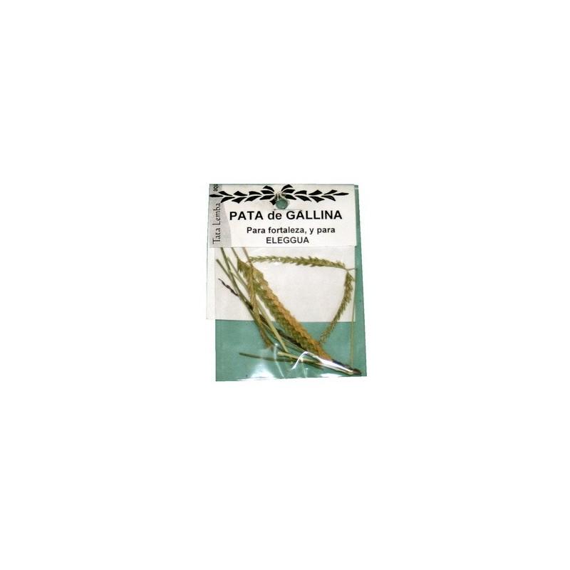 HIERBA PATA DE GALLINA