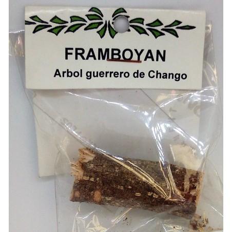 PALO FRAMBOYAN