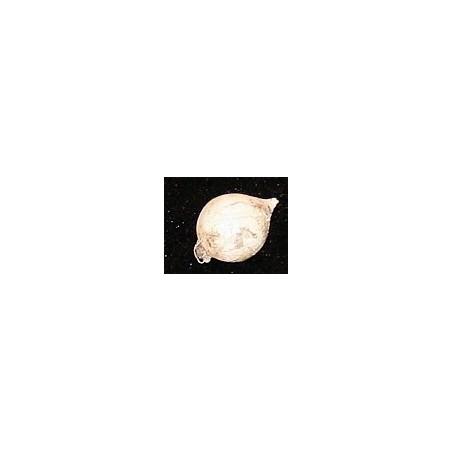 ajo macho pequeño natural , fresco